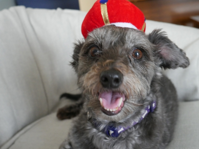 happy-and-the-hat
